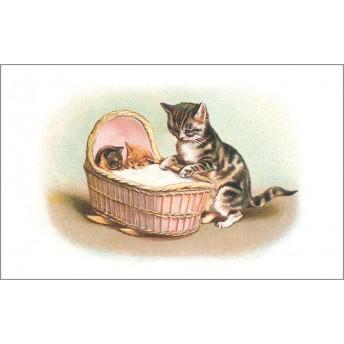 Postcard cradle cat