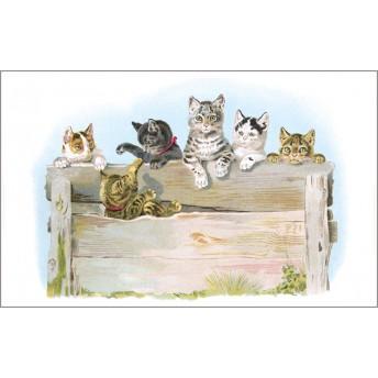 Postcard cat fence