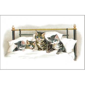Postcard cats bed