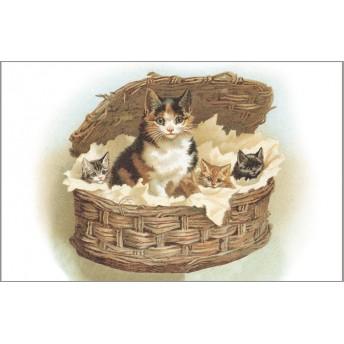 Postcard cats basket
